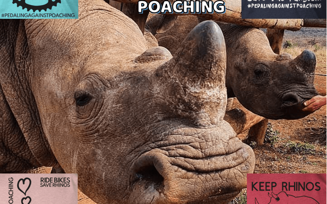Save a Pangolin – Save a Rhino – NEW Pedaling Against Poaching Items!